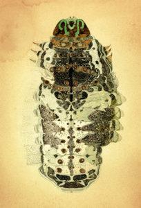 【ギャラリーマルヒ企画展】桃山鈴子個展 「わたしはイモムシ」I, Caterpillar